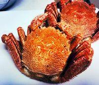 大晦日は年末恒例の毛蟹