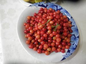 自然栽培のさくらんぼ