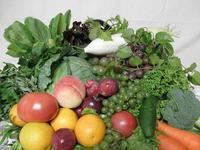 栄養と酵素