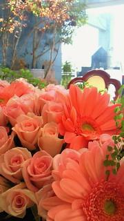 きれいな花々
