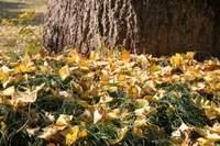 秋から冬へ 友愛園の庭